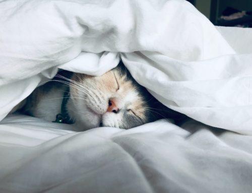 El efecto del alcohol en el sueño